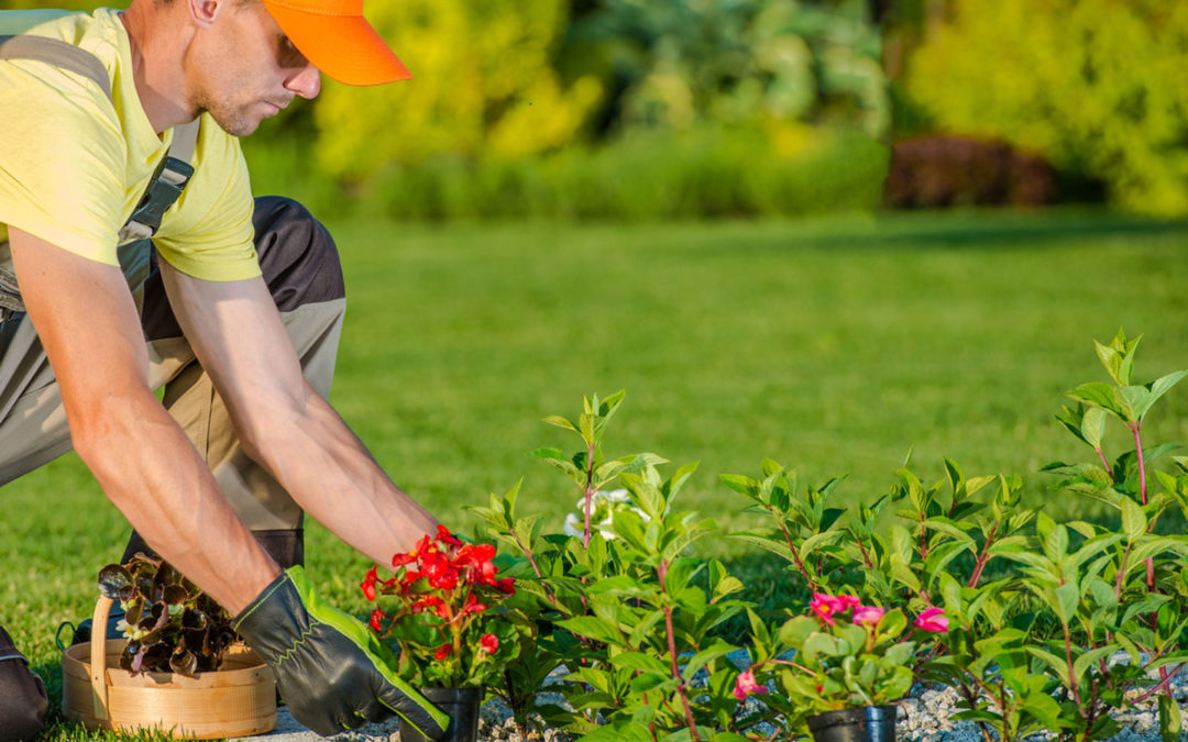 Travaux de jardinage : pourquoi et comment planifier le temps idéal pour les réaliser ?